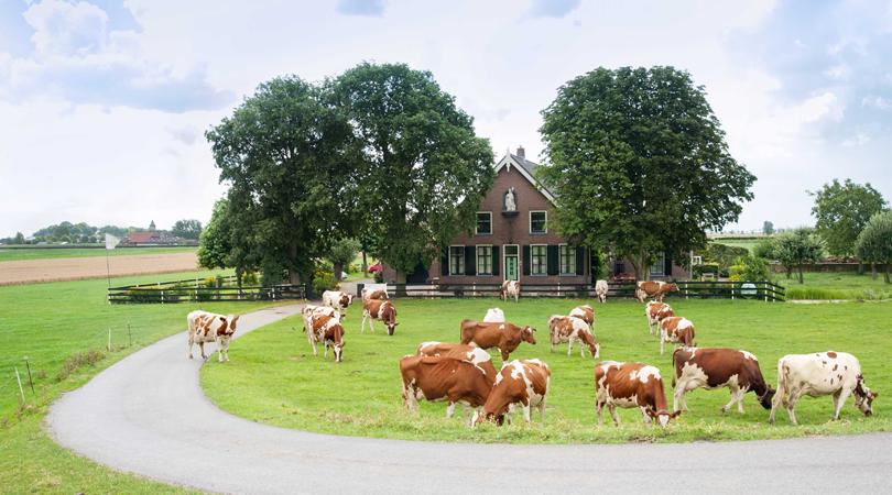 bed en breakfast boerderij