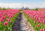 Bedandbreakfast.nl; Verhalen van een Mystery Guest – Tijd voor Tulpen