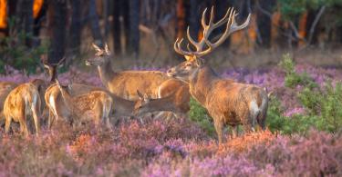 Bedandbreakfast.nl; Mooiste Nationale Parken van Nederland